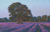 Evening at the Lavender Fields 12x18 - SOLD